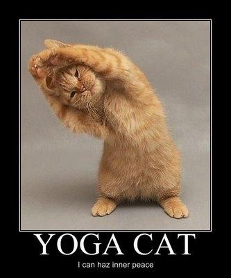 cat yog